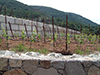 Vineyard Retaining Wall - Thumbnail