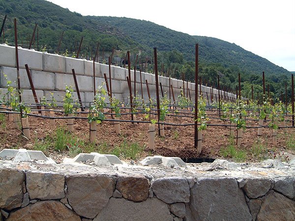 Vineyard Retaining Wall